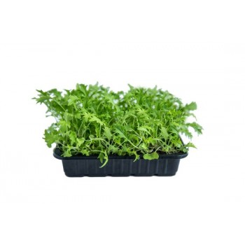 Капуста Мизуна зеленая 50 гр.