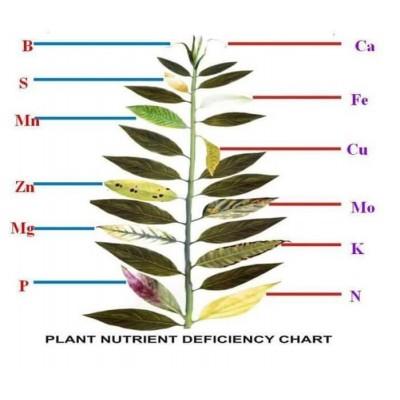 Питательные элементы растений
